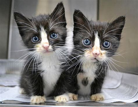 Twin Cats | 25 animal twins that are tough to tell apart