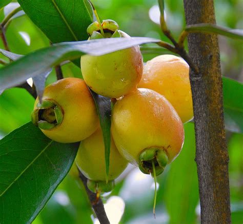 fruit trees names photo