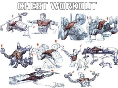 chest workout paperblog
