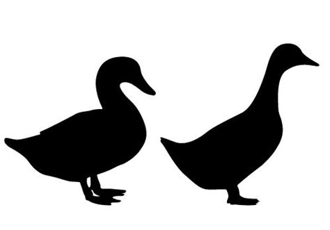 Bebek Ride On Duck Dinaiki and duck silhouette vector free