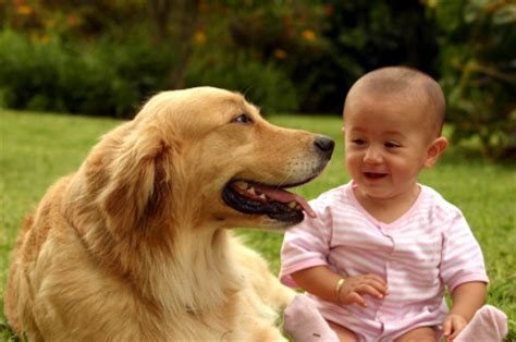 dogs with babies dogs babies how to introduce dogsquad