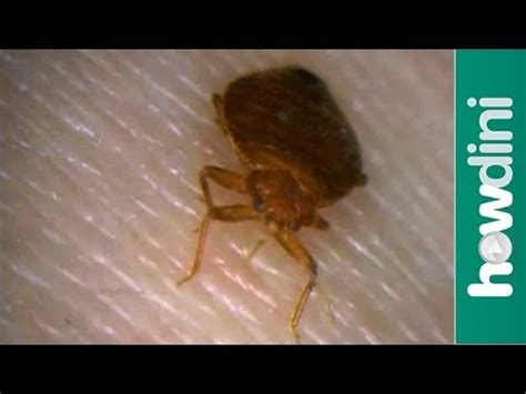 bed bugs youtube how to prevent a bed bugs infestation how to check for