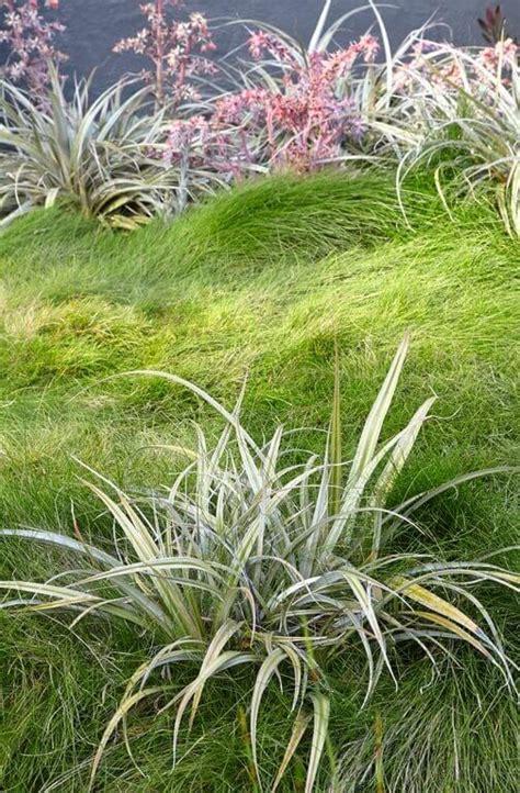 how to grow grass in backyard 40 remarkable backyard grass ideas