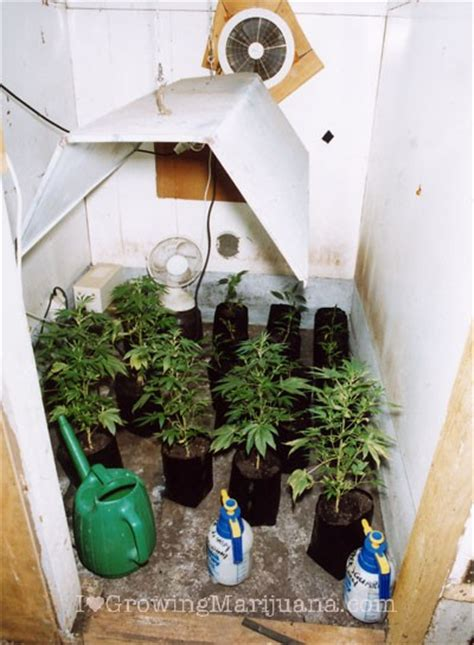Best Grow Closet by How To Setup An Indoor Marijuana Garden On A Budget The