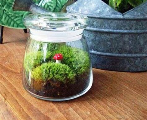 Jar Decorating Ideas For - 20 ideas for home decorating with glass plant terrariums