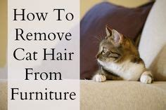 how to remove pet hair from sofa 1000 ideas about remove cat hair on pinterest cat urine