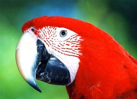 imagenes animales aves im 225 genes de aves