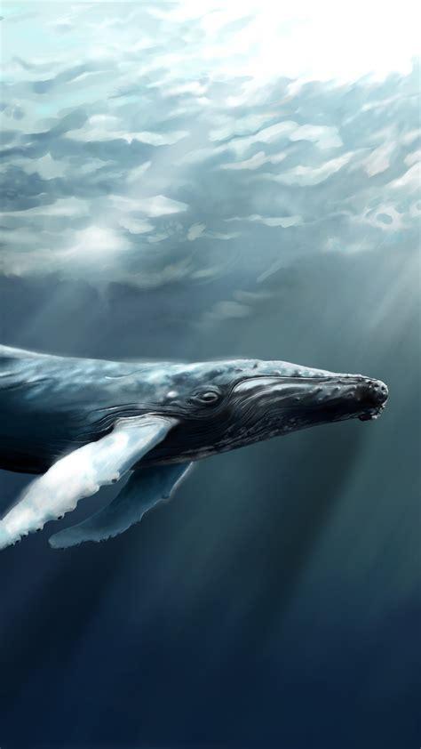 wallpaper whale sea ocean water underwater diving