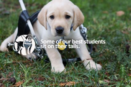 guide dogs of america make a difference with guide dogs of america iamaw
