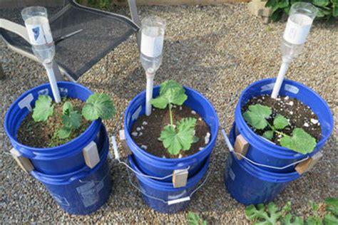 sip basics  watering  irrigated planter gardening