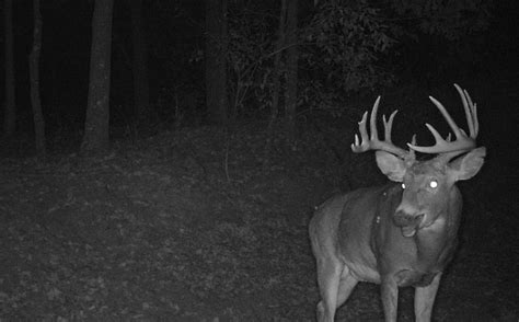 buck locations trail locations for increasing buck pics whitetail