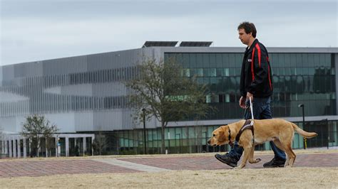 new puppy guide new tech helps handlers monitor health well being of guide dogs