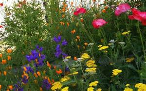 gallery for gt english cottage garden plants