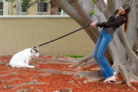 puppy pulling on leash hamster leash harness get free image about wiring diagram
