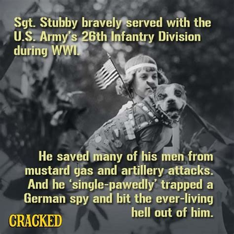 Sergeant Stubby Cracked 10 Cracked Posts Everyone Went Nuts Last Week 8 9