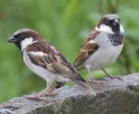 garten vogel bird quizzes garden birds 01 most common