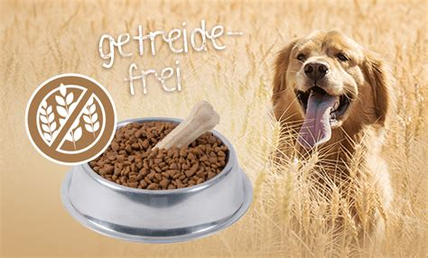 wann werden hunde läufig wann sollte getreidefreies hundefutter gegeben werden