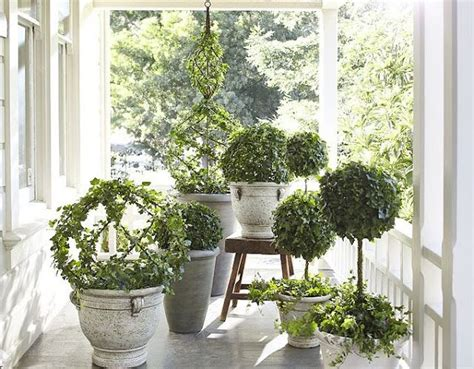beautiful house plants beautiful topiaries house plants pinterest blue and