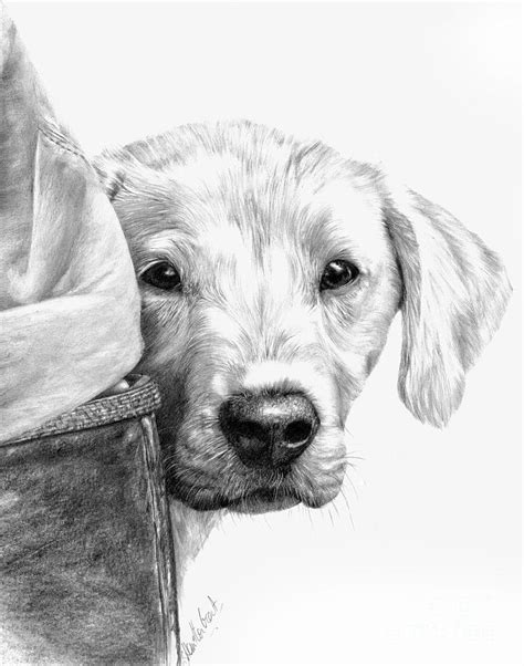 drawings of puppies pencil drawings of dogs and puppies litle pups