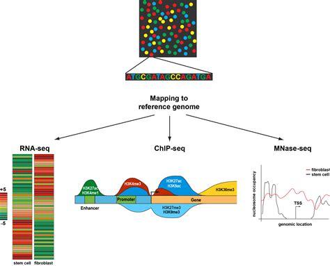 illumina sequencing principle sequencing