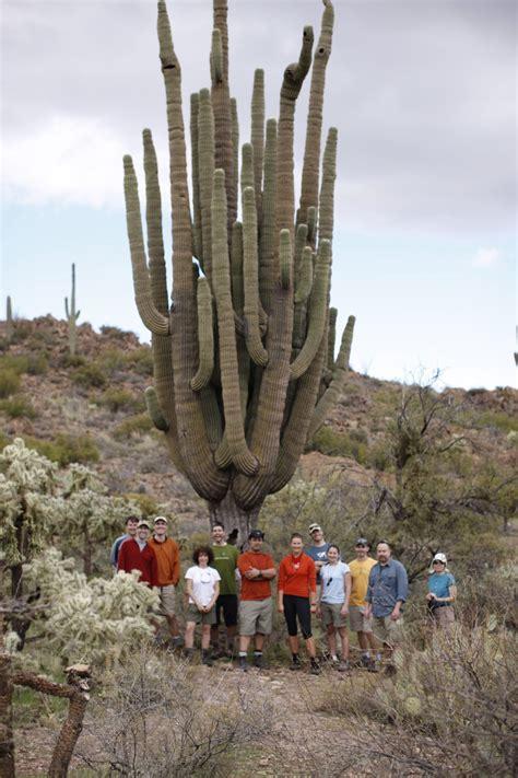 150 M To Ft by Giant Saguaro Cactus Aoa Blog Phoenix Hiking Tours