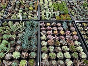 outside impact succulent plant nursery brisbane growing