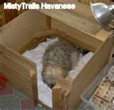 mistytrails havanese whelping ideas for my on whelping box crates and golden retrievers