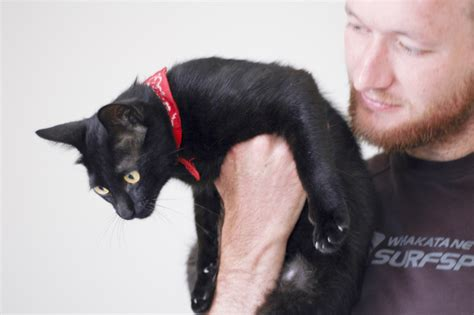 how to stop a cat from scratching the couch 3 easy ways to stop a cat from biting and scratching