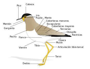 preguntas cientificas comunes anatom 237 a de las aves wikipedia la enciclopedia libre
