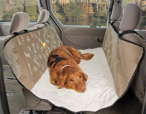 puppy gets car sick car sickness symptoms and prevention methods for your pooch
