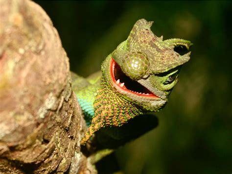 scow moth battle net taken down in ddos attack lizard squad claims
