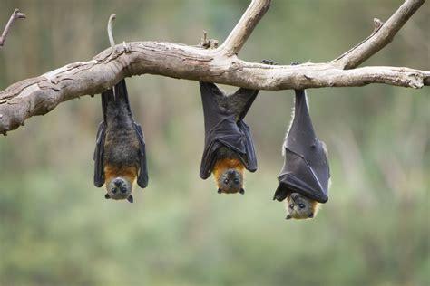 magic1059 bat night