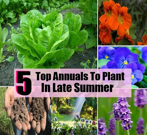5 top annuals to plant in late summer diycozyworld