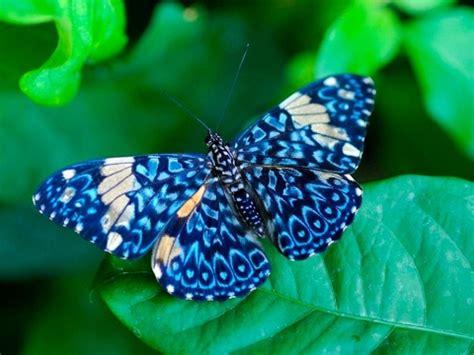 imagenes d mariposas hermosas animales hermosos las mariposas mas bonitas del mundo