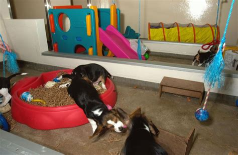 housing and husbandry of dogs nc3rs