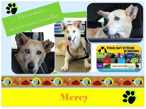 mercy puppy rescue mercy
