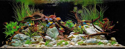 freshwater aquarium aquascape design ideas first tropical fish aquarium tropical fish keeping