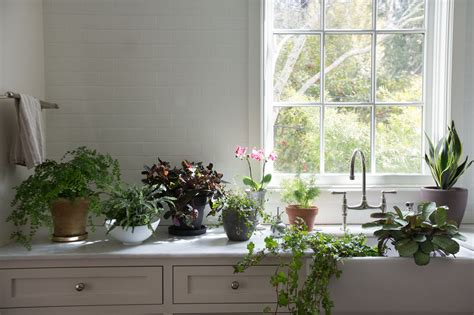 Best House Plants For Window Best Houseplants 9 Indoor Plants For Low Light Gardenista
