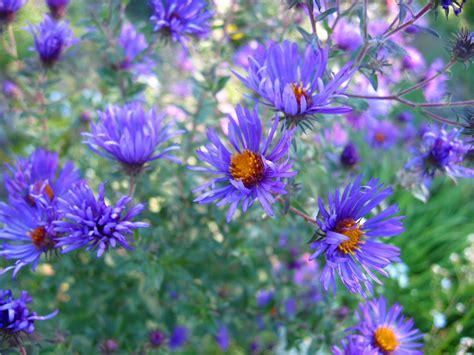 Flowers For Butterfly Garden Soul Gig Reminder Lapham Peak Butterfly Garden Flower