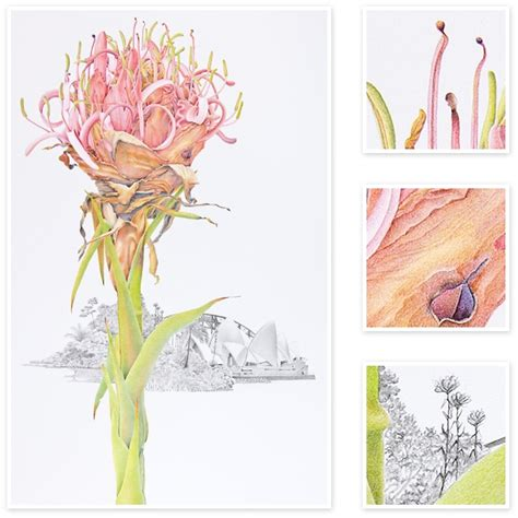 libro botanical sketchbook inspiration and doryanthes excelsa gymea lily sharon field botanical artist botanical artist inspiration