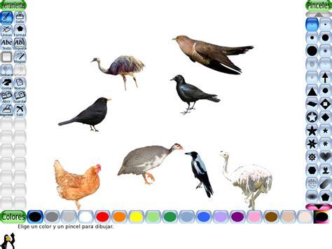 imagenes animales con plumas leticia n oco trabajos de los 250 ltimos d 237 as