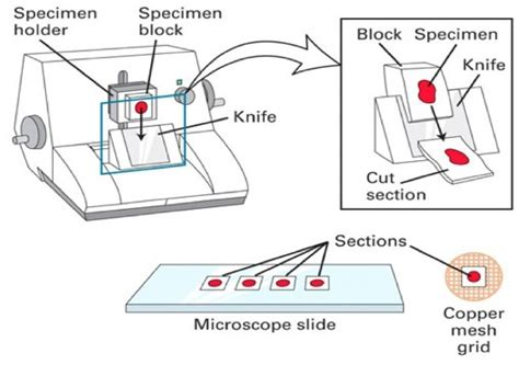 microtome sectioning image gallery microtome parts
