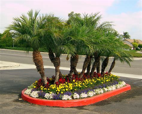 palm trees in the landscape palm tree floral landscaping