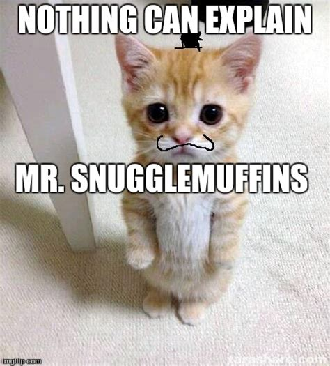 Cute Cat Meme Generator - cute cat meme generator 28 images who can resist a