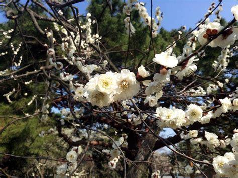 gosho le jardin imp 233 rial de kyoto dozodomo