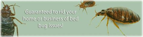 how do bed bugs breed bed bugs ecoliving pest solutions