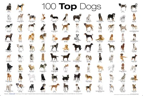top  dog breed poster