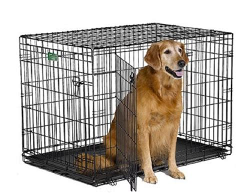 dog house training products house training products supplies and equipment a buyers