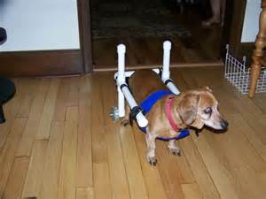 wheel chairs for dogs wheelchairs for small dogs images
