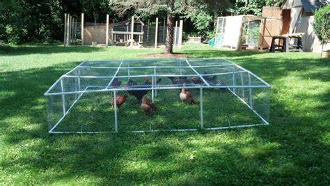pvc mobile chicken run backyard chickens